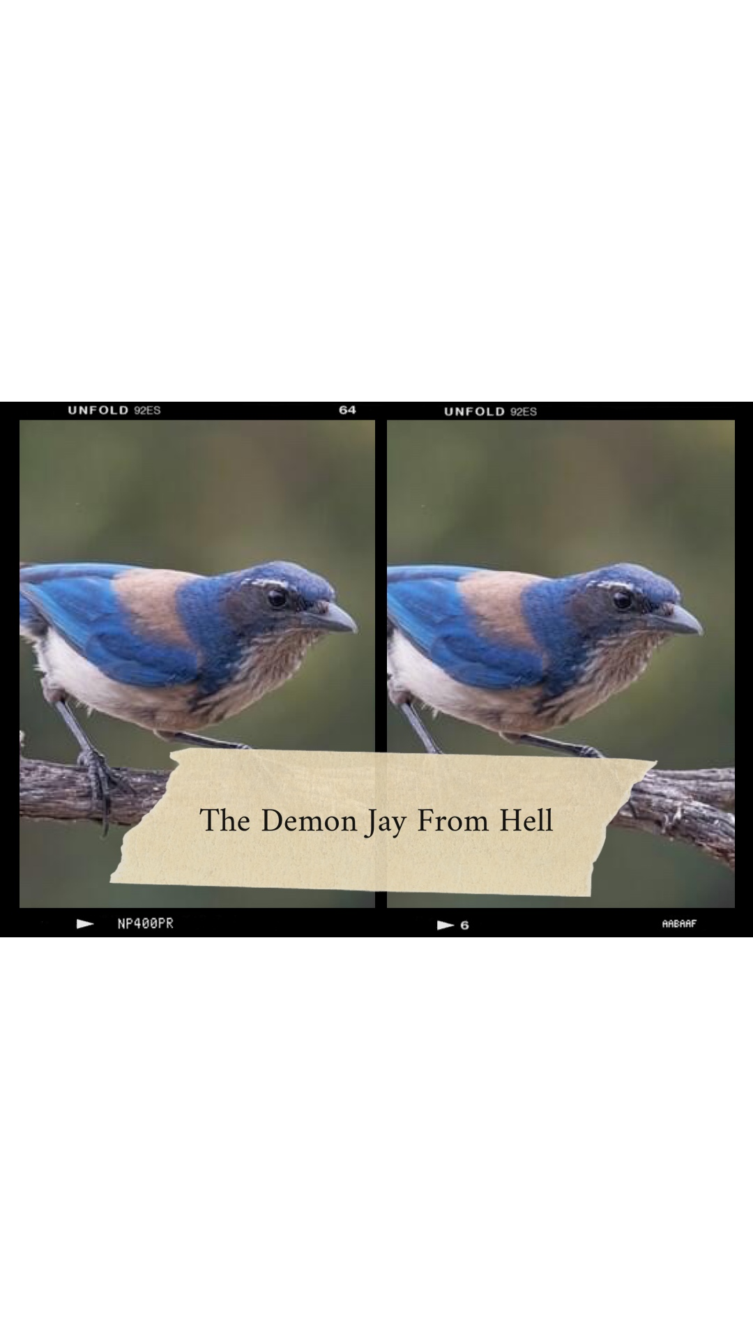 The Demon Jay From The Pits of Hell